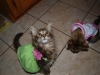 kittiesinsundresses