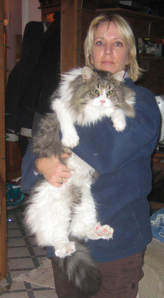 maine coon cat breeder kittens in ny pa